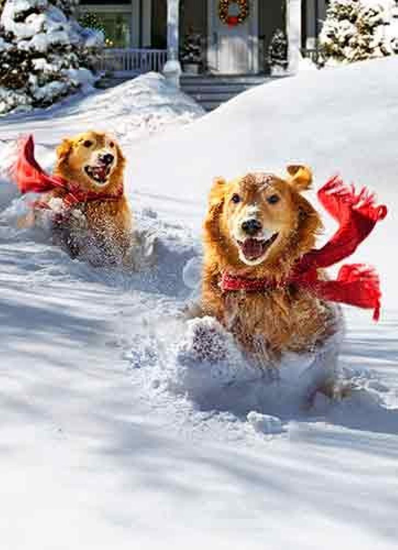 Avanti Weihnachten Karten, Dashing Through The Snow Bellen All The Way 100-Count B00LT4PRIQ   München Online Shop