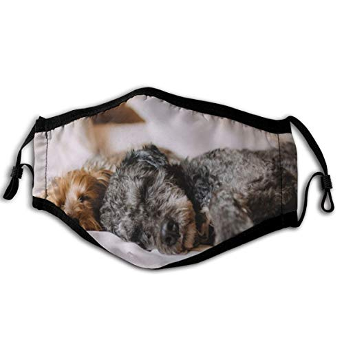 ocaohuahuaba Bett Hund Tiere Haustiere Entspannen Schlafen Ruhig Schläfrig Stoff Mundabdeckung Maske für Laufen im Freien