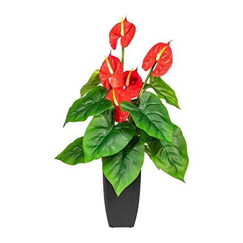 Pflanzen Kölle Anthurie, rot, ca. 64 cm, mit Kunststofftopf 11,5 x 11,5 x 17,5 cm