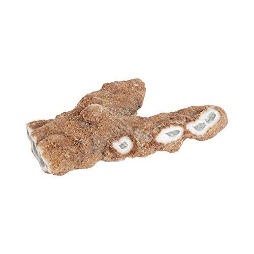 GEMHUB Ópalo blanco fosilizado natural sin tratar, 264,15 quilates, piedra preciosa de ópalo en bruto para joyería y manualidades