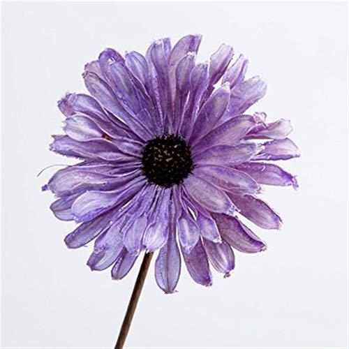 Victor Johnsond 5Gerbera ewige Blume getrocknete Blumen handgemachte Blumen Hauptdekoration Blumendekoration Foto Requisiten (Color : Purple)
