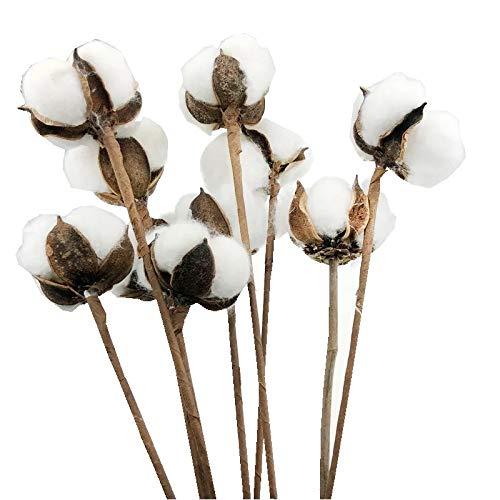 Ivie - Vástagos de algodón - 5 Unidades, 10 Unidades de Ramas de decoración para jarrones: Amazon.es: Hogar