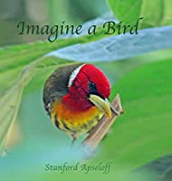 Imagine a Bird