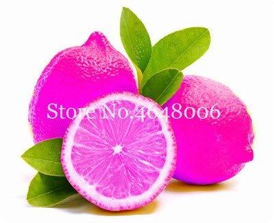 Bloom Green Co. 50 Pcs comestibles de fruits Meyer Citron Bonsai plantes exotiques colorés Citrus Limon fruits frais Arbre Plantes potagères haute taux de survie: i