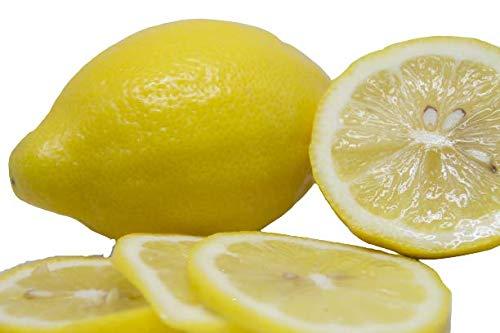 国産 冷凍レモンスライス 1�s 輪切りレモン レモンスカッシュ レモンティー レモンハイ お料理 デザート