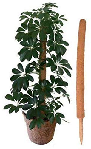 Noix de coco Tiges de coco Plantes grimpantes de soutien pieu, plante vertes de pilier de jardinage Poteau de jardinage de totem de coco pour plantes grimpantes Vignes Creepers