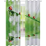 Cortinas opacas para niños, mariquitas en un tallo sobre el agua, a rayas, animales, imagen fresca del medio ambiente, 52 x 72 cm de ancho x 72 cm de largo, cortina opaca para dormitorio, rojo y verde