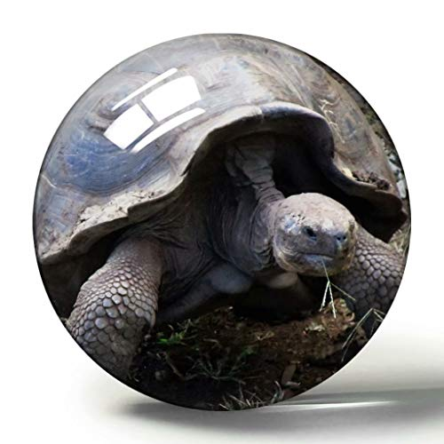 Hqiyaols Souvenir Ecuador Tortuga Gigante Galápagos Islas Tortuga Imán de Nevera 3D Colección de Recuerdos Regalo de Viaje Círculo Cristal Imanes de Nevera