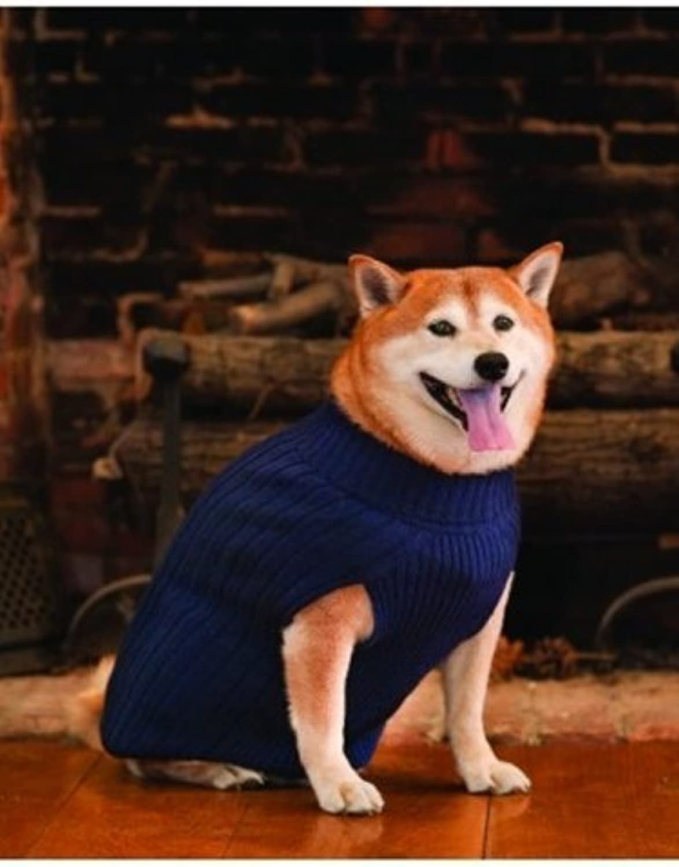 Fashion Pet Outdoor Dog Classic Turtleneck Sweater, Medium, bluee