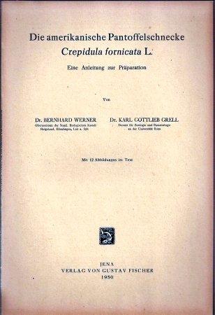 Die amerikanische Pantoffelschnecke Crepidula fornicata L