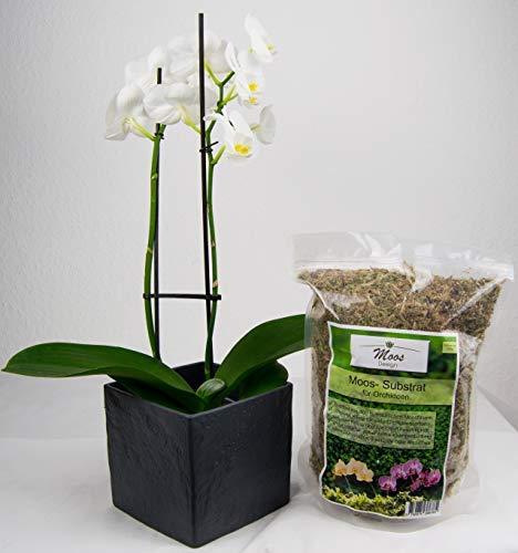 Orchideensubstrat, Orchideenerde, Blumenerde, Sphagnum Moos, Substrat, Granulat, Dünger, Anzucht (125g)