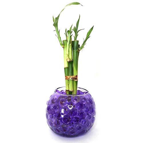 Vaso em Vidro com 5 Hastes de Bambu da Sorte