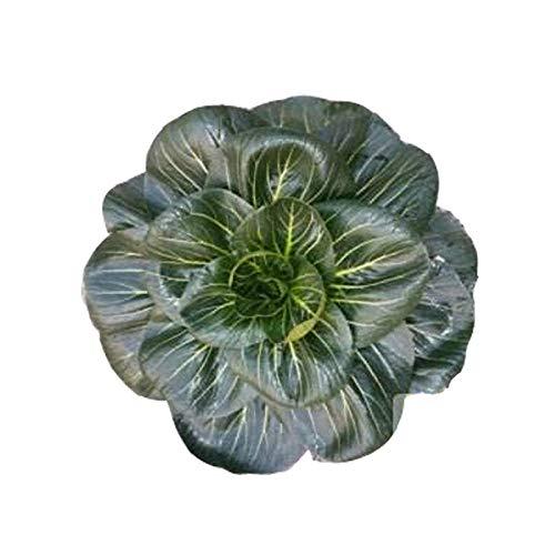 Semillas de repollo verde de cabeza grande negra, negro de hoja grande, semillas de hortalizas de cuatro estaciones 300 piezas