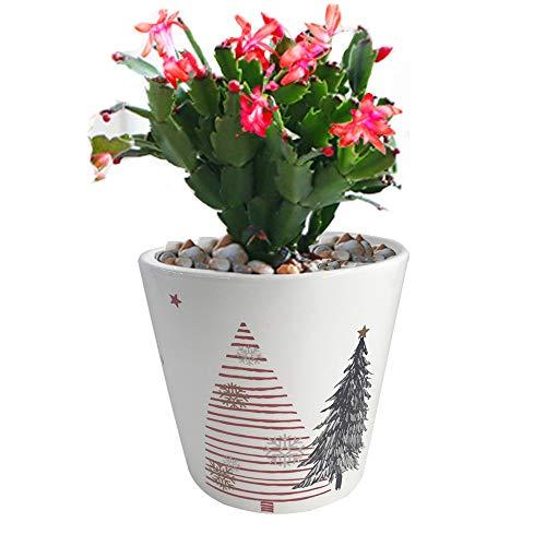 Orchid Pots 5.3inch Plant Pots Succulent Planter Flower Pot...