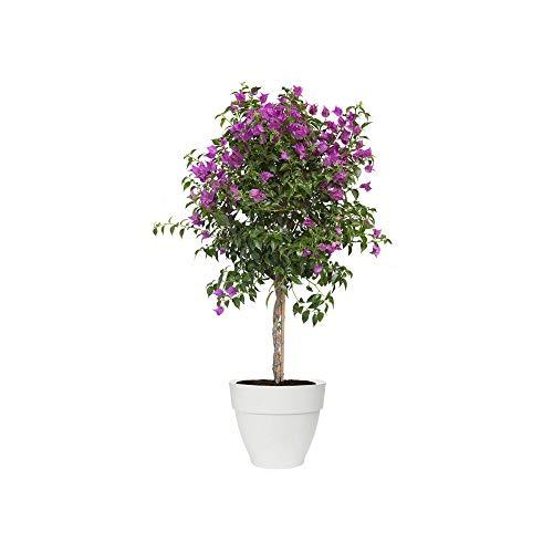 Elho Vibia Campana rond 40 - bloempot - wit - buiten - Ø 40 x H 33,4 cm