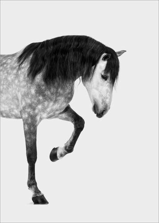 hasta un 70% de descuento Posterlounge Lienzo 60 x 80 cm  from The The The High Horse de Finlay and Noa - Cuadro Terminado, Cuadro sobre Bastidor, lámina terminada sobre Lienzo auténtico, impresión en Lienzo  bajo precio del 40%