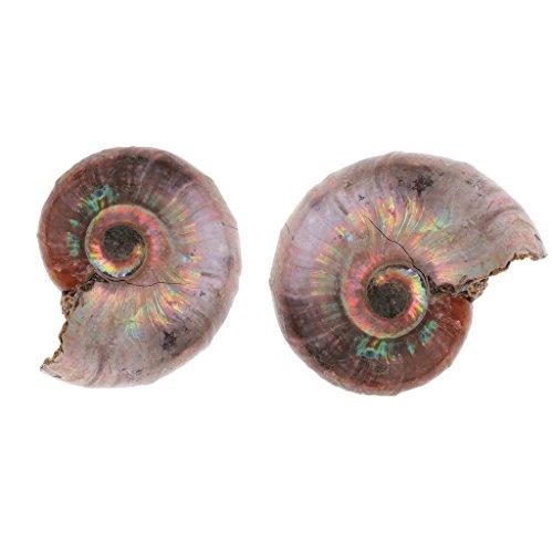 yotijar 2pcs Rainbow Ammonite for DIY Ornaments/Pattern