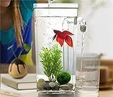 caihuashopping Acuario Tanque de Pescado Perezoso de plástico Pequeño Acuario Mini Goldfish Bowl Square Fish Tank Tanque de Pescado Redondo Tanque Ecológico Fachowl Rransparen Acuario Estable