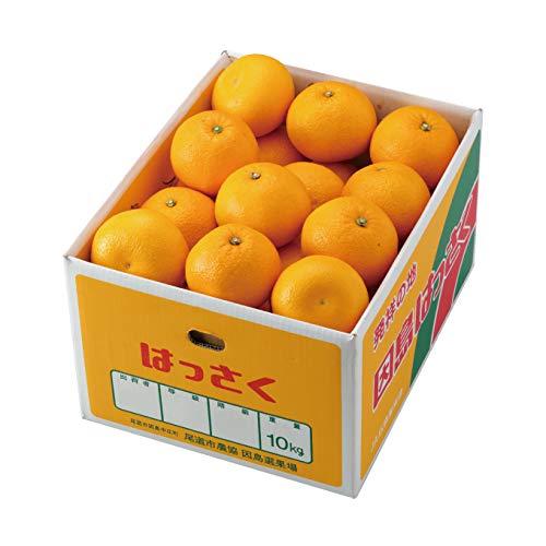 はっさく 八朔 訳あり 大きさおまかせ 10kg 広島県産 ハッサク みかん ミカン