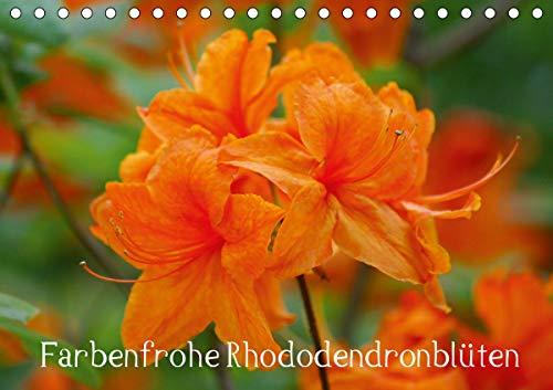 Farbenfrohe Rhododendronblüten (Tischkalender 2021 DIN A5 quer)