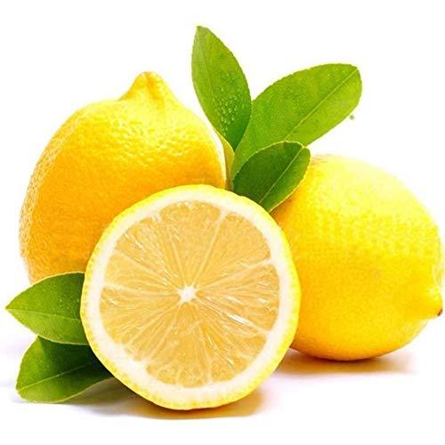 XdiseD9Xsmao 20 Stks Citroen Boom Fruit Zaden, Tuinwerf Boerderij Bonsai Sierplant