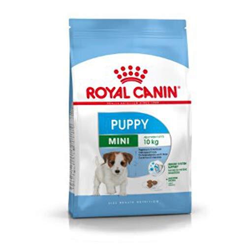 Royal canin mini junior pienso perros raza pequeña 🔥