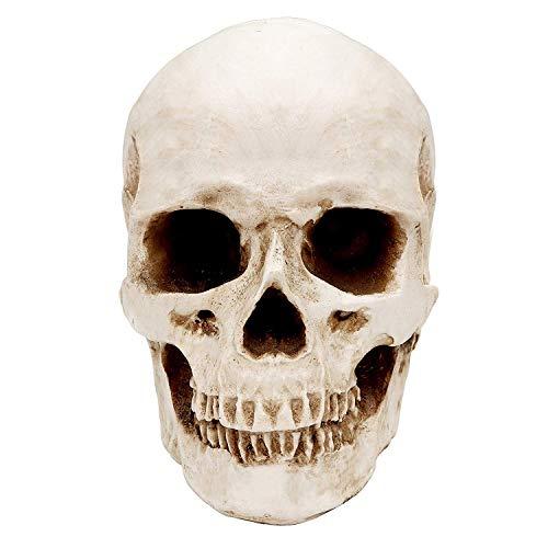 Kurtzy Cráneo Humano - (14,5x12cm) Calavera de Resina Réplica para Anatomía Enseñanza Médica, Decoración de Halloween, Casa Decoracion