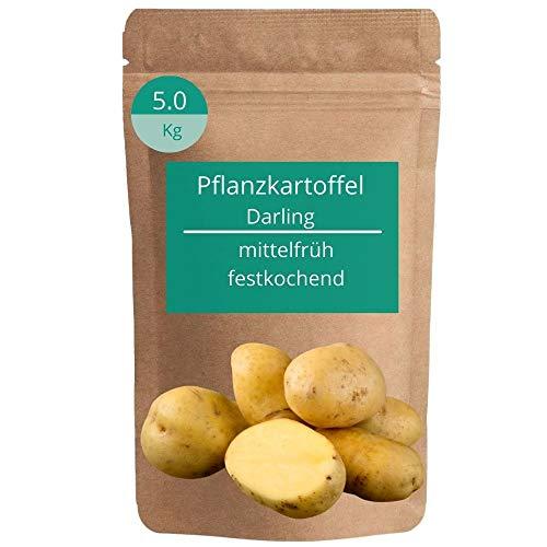 Jasker's Pflanzkartoffeln Darling 5kg festkochend | mittelfrühe Saatkartoffeln | Steckkartoffeln | fest kochend | Kartoffeln pfanzen & anbauen | Frühkartoffeln | Saatgut | Setzlinge