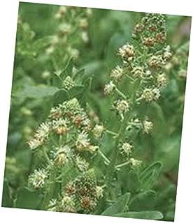 Seeds Mignonette Ameliorata -Reseda Odorata- 100 Seeds