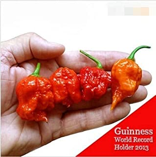 Tee7 Reaper Peppere Chilli 100 Seeds Fresh Rare Red