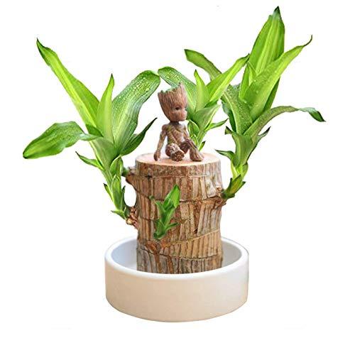 1Pc Mini Brazilian Wood Potted Plants Clean Air Lucky Wood Plant Pot Hydroponic Plants Hydroponic Tree Stump Desktop Plants 6-6.5 cm in Diameter Brazilian Wood + Groot + Base, Brazil Iron Ornaments
