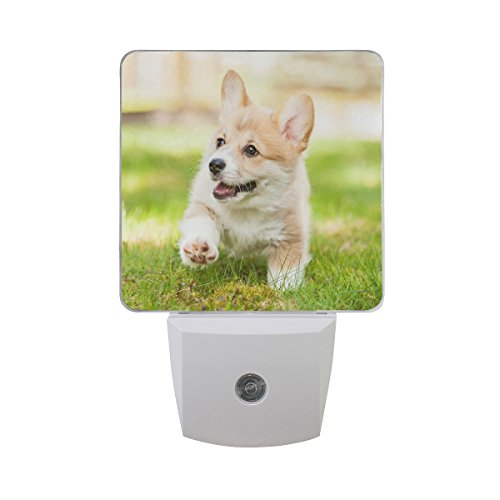 Naanle Set of 2 Pembroke Welsh Corgi Puppy Dog Running Green Grass Bright Spring Sunshine Auto Sensor LED Dusk to Dawn Night Light Plug in Indoor for Adults