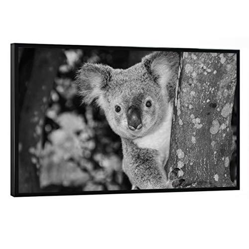 artboxONE Poster mit schwarzem Rahmen 30x20 cm Natur Neugieriger Kuala Bär im Baum - Bild Koala koalabär Tier