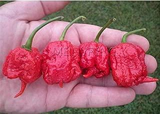 100% True Giant 200 Pcs Pepper Bonsai Giant Marconi Hybrid Giant Pepper DIY Home Garden Vegetable Plant