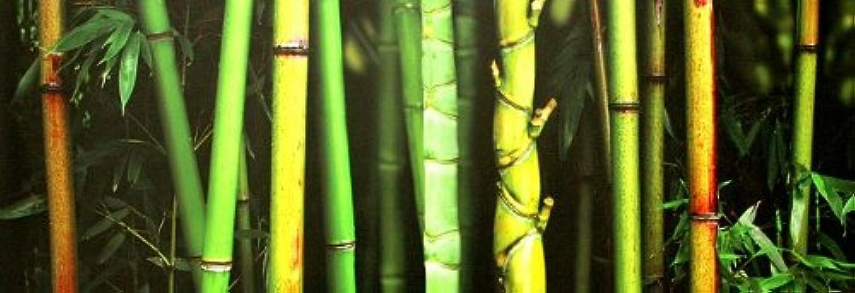 Keilrahmen-Bild - Roberto Scaroni  Bamboo 120 x 40 cm