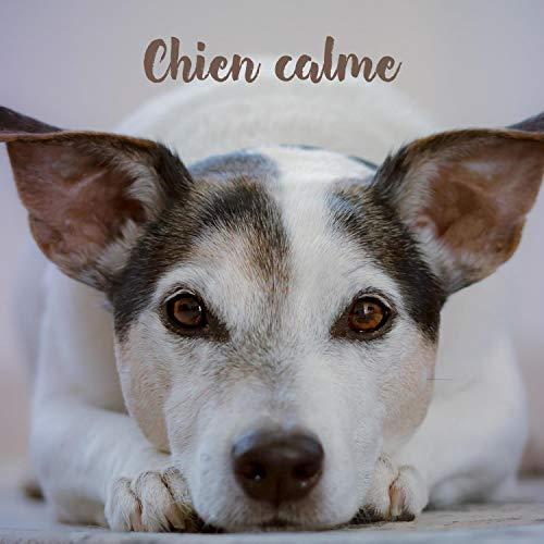 Chien calme – Piano musique classique pour chiens, chats, chiots, anti anxiété, soulagement du stress, flûte, saxophone, chansons relaxantes pour dormir