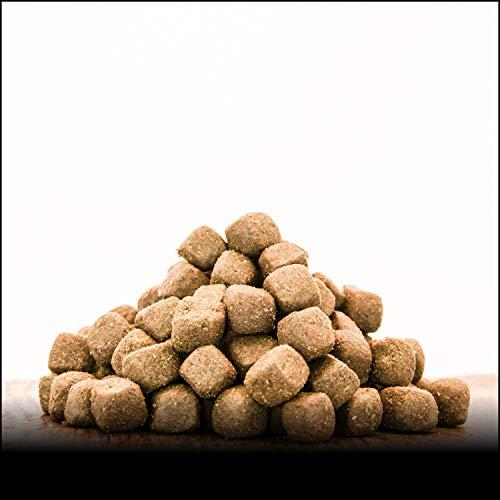 George & Bobs Ente & Lachs Adult   3 kg   Getreidefrei   70{34f6053352edbe1588e27c725e2ce1d03718a63e4a3abb47fe648daf7d82937f} Fleischanteil   Superfoods   Trockenfutter   Grünlippmuschel   für ausgewachsene Hunde