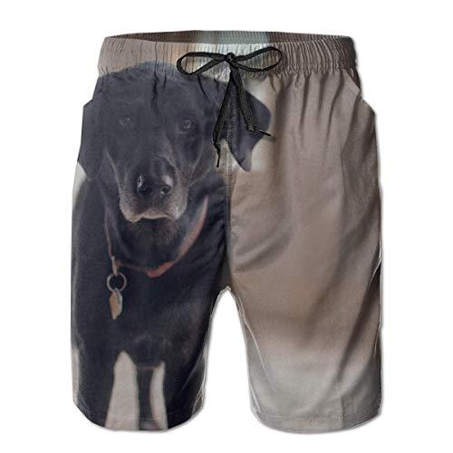 Labrador Retriever Collar de Perro para Hombre Verano Trajes de baño Gráficos 3D Secado rápido Divertidos Pantalones Cortos de Playa con Forro de Malla, M