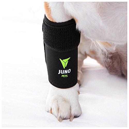JunoPets Dog Canine Leg Knee Brace, Hock Joint...