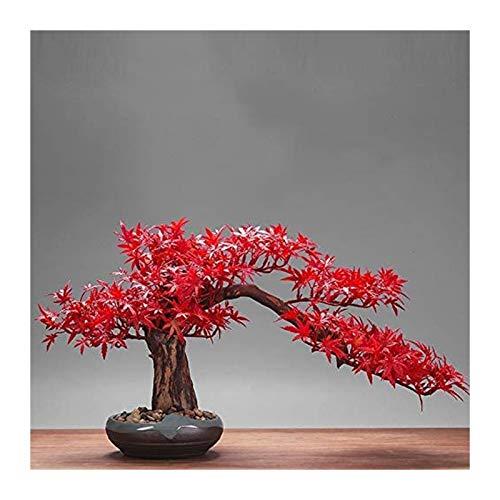 árbol de pino artificial artificial bonsai Árbol de bonsái artificial Falso Fallo rojo hoja de arce artificial Bonsai Estilo decoración para la suerte y la riqueza Planta de bonsái ficus para decoraci