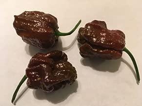 20 Chocolate Trinidad DOUGLAH X 7 Pot Pepper Seeds Ultra Rare HOT 2017 Harvest