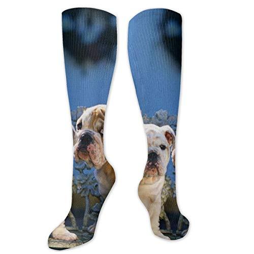 Calcetines de poliéster y algodón por encima de la rodilla, estilo retro, unisex, para muslo, cosplay, botas largas, para deportes, gimnasio, yoga, descarga x Bulldogs, diseño de banco, sentado