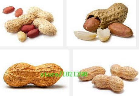 5pcs / paquet de graines Arachis végétales, cultures quatre rouges arachides graines bonsaï bricolage maison jardin
