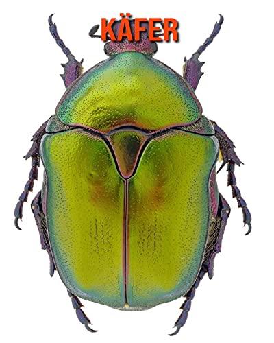 Käfer: Schöne Bilder & Kinderbuch mit interessanten Fakten über Käfer