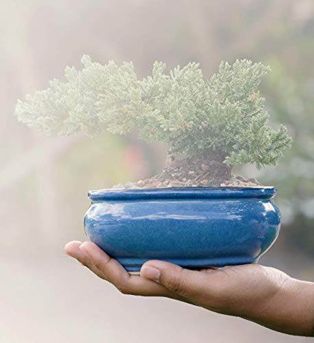 Shear Zen Bonsai Pot 6 Inch Glazed Blue Decorative Planter Oval Ceramic Container for Bonsai Plant, Bonsai Tree Starter Kit, Succulents, Small Plants, Table Centerpieces or Indoor Outdoor Gardens
