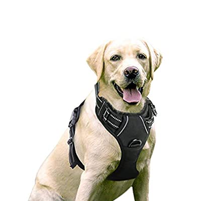 rabbitgoo Dog Harness, No-Pull Pet Harness with 2 Leash Clips, Adjustable Soft Padded Dog Vest, Reflective No-Choke Pet Oxford Vest with Easy Control Handle for Large Dogs, Black, L by GLOBEGOU CO.,LTD