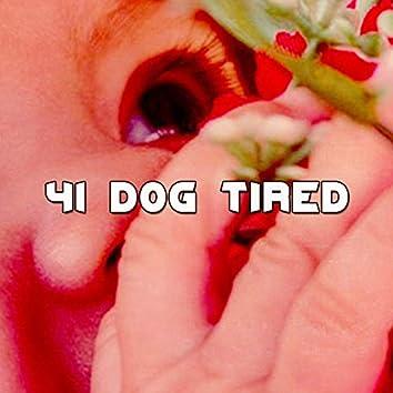 41 Dog Tired