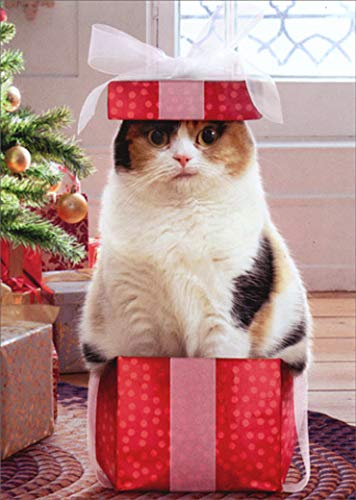 Cat in Small Box Box of 10 Funny/Humorous Christmas Cards