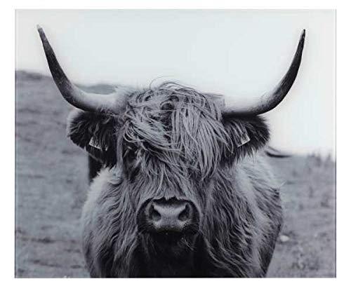 WENKO Glasrückwand Highland Cattle 60 x 50 cm - Spritzschutz für Herd oder Spüle, Gehärtetes Glas, 60 x 50 cm, Mehrfarbig