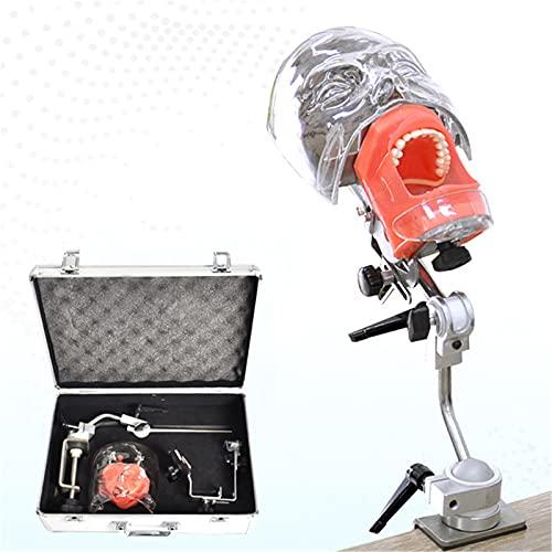 ANYURAN Dental Manichino Modello Phantom, Dental Phantom Testa Modello Head Education Pratice Dental Class for Learning Dental Student Model Bench Mount for Dentist Education